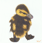 Duckling by cronis