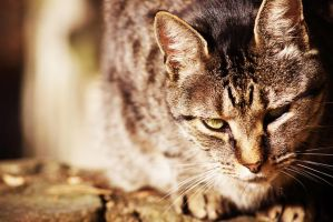 Blood Mountain Cat by 37mm-Angel
