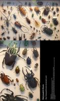 Assorted Insects Stock 4 by Melyssah6-Stock