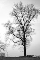 tree by osiolekpl