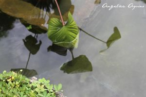 Repeating Reflections by Angelica-Aquino