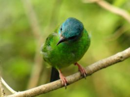 Green Bird by purdticker