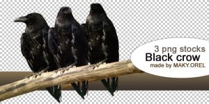 PNG STOCK SET: Black crow by MAKY-OREL