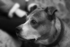 Dog by Bazz-photography