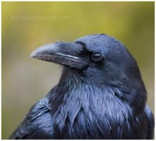 Raven Profile by michael-dalberti