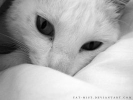 Pillow waking by Cat-Mist