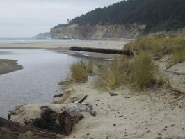 Oregon Coast 007 by PenhuinStockService