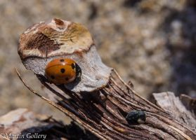 ladybugs Hidden Beach140527-139 by MartinGollery