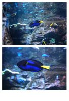 027 Dory by BelialMadHatter