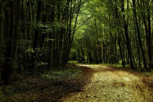 Into the woods by joiedevivre89