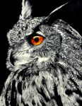 Sunset Stare--Eagle Owl by TubaQueen
