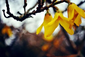 Yellow (1) by LeaLion