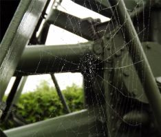 Spider Web by TheWeirdPhotography