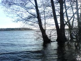 Trees in High Water STOCK III by ChaosStocks