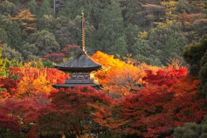 Autumn colors, Kiomizu-dera by onkami