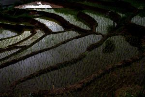 Ricefields.. by bingbing51