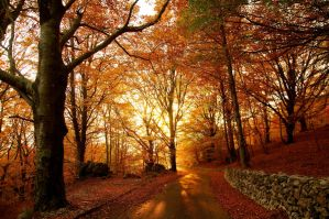 Autumn Lothlorien by wildfox76