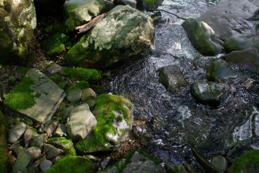 Mossy Water by EmilyHilliard