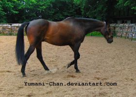 Horse Stock Orlando 15 by Yumani-Chan