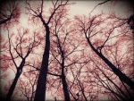Arteries and Empty Spaces by deidude34