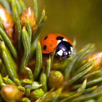 Ladybird in my garden by safe-t