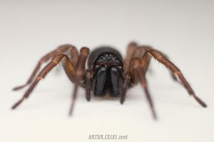 90.Spider by Bullter
