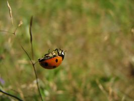 Ladybird 2 by Garbuend