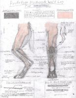 Old Leg Design by TheCostumeArchive