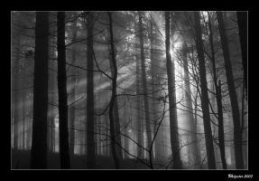 misty morning 3 by rhipster