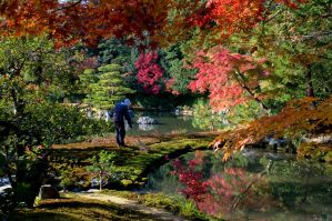 Japanese Garden, Raking. by IainInJapan