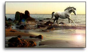 Beach Run by CoutureEquineDesigns