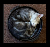 the bowl-cat by nostromo426