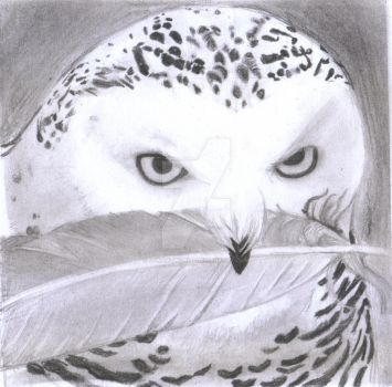 Owl / Buho by UGNArtWorld