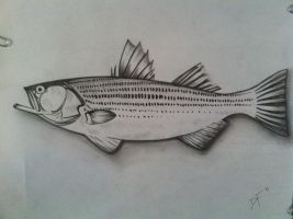 Striped Bass by Dannfive0
