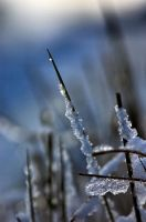 Freeze and Thaw by Aconitum-Napellus