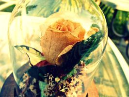 Cross Processed Rose by tararleigh