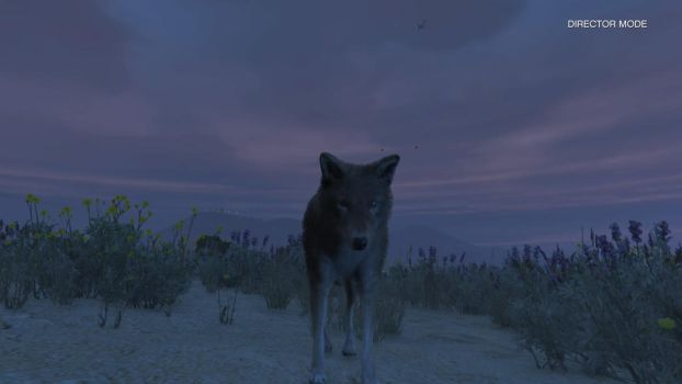 GTA V Coyote front side view by Dingofan