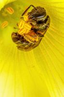 Collecting Pollen II by dalantech