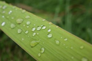 Rain Drops by WoodenOx