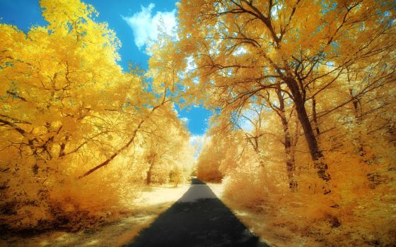 Yellow Trees Part II by myINQI
