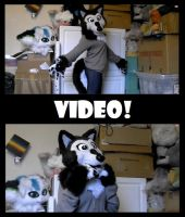 VIDEO: Cute Canine Fursuit (sold) by CuriousCreatures