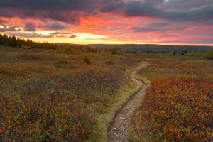 Dolly Sods Twilight Trail by somadjinn