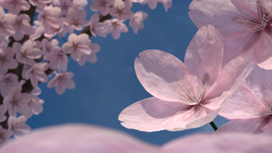 Cherry Blossoms by Blanco111