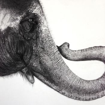 A voice for elephants by kenglye