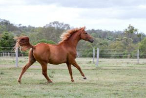 Dn wb canter side view by Chunga-Stock