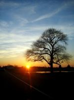 Tree At Sunset by erinroonifer