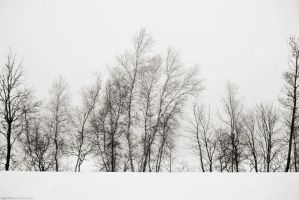 Foggy Winter by EugenieA