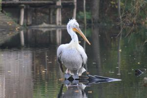 pelican by two-ladies-stocks