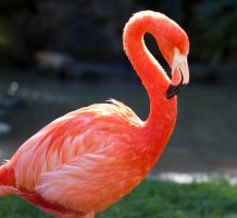 Another Flamingo by gmusashi
