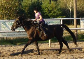 Stock 431: horse+rider gallop2 by AlzirrSwanheartStock